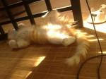 chaton mignon, drole