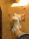 chaton, drole, insolite