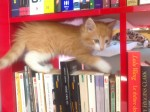 chaton mignon, drole, chat, livre